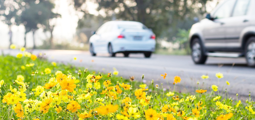 5 Safety Tips To Follow When Driving In Spring